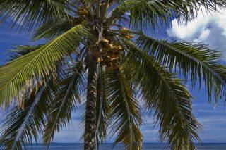 http://www.anjiamarango-beach-resort.com/wp-content/uploads/cocotier-nosybe-320x213.jpg