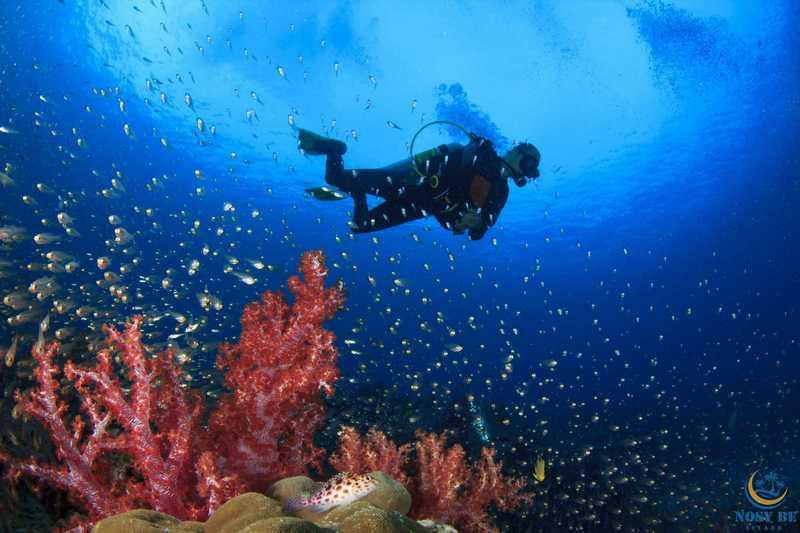 http://www.anjiamarango-beach-resort.com/wp-content/uploads/plongee-nosybe-8.jpg